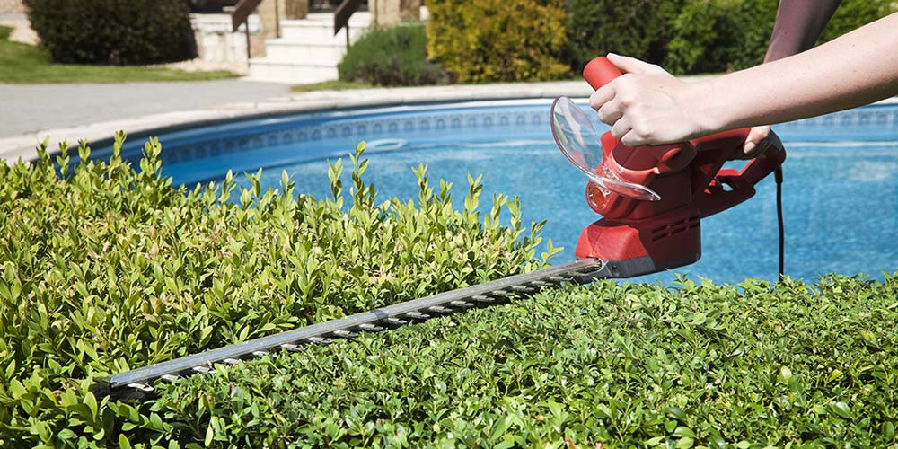 Hedge Trimmers: What You Need to Know Before You Buy